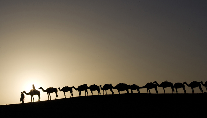 art wolfe travels to the edge download